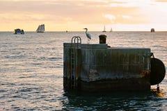 在日落,基韦斯特岛的鸬鹚 免版税库存图片
