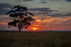 在日落,挖掘者休息,维多利亚,澳大利亚, 2016年9月的产树胶之树 库存图片