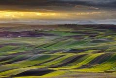 在日落,普利亚-南部的Ita的Apulian风景 免版税库存图片