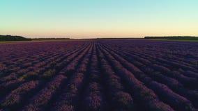 在日落,空中寄生虫视图期间,淡紫色在乡下调遣 股票视频
