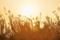 在日落,葡萄酒口气的由后面照的草 图库摄影