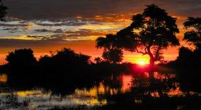 在日落,非洲日落的树 库存图片