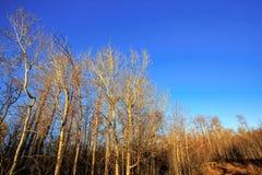 在日落,麋鹿岛国家公园的树 图库摄影