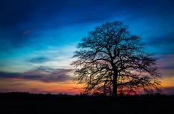 在日落以后的唯一树 免版税库存照片