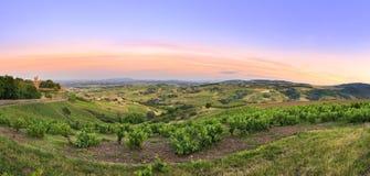 在日落以后,博若莱红葡萄酒,法国葡萄园全景  免版税库存照片