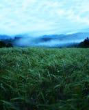 在日落以后 免版税图库摄影