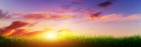 在日落晴朗的天空的绿草 全景,横幅 库存照片