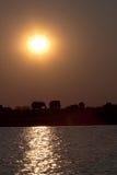 在日落2的大象 库存图片