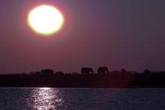 在日落3的大象 免版税图库摄影