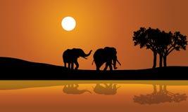 在日落africana的非洲大象 免版税图库摄影
