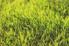 在日落bokeh射击的绿草 免版税图库摄影