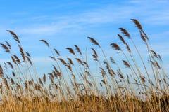 在日间海滩的芦苇 免版税库存照片