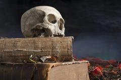 在旧书的老头骨 库存图片