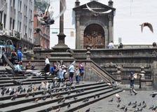 在旧金山教会入口的鸽子在基多,厄瓜多尔 库存图片