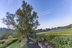 在早晨光的农村eifel风景 免版税库存图片