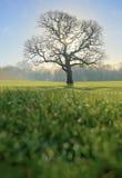 在早晨光的树 免版税库存照片
