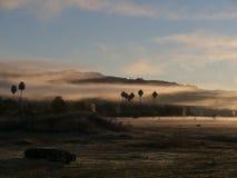 在早晨光的棕榈树 免版税库存照片