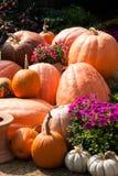 在早晨光的秋天期间南瓜显示 库存照片