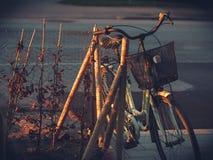 在早晨光的年迈的老妇人自行车 免版税库存图片