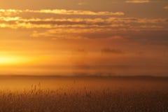 在早晨光芒的耳朵 库存照片