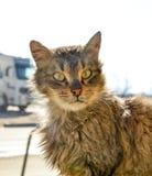 在早晨太阳的一只头发的小猫 库存照片