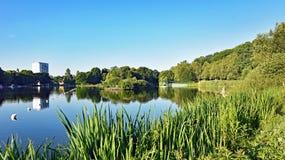 在早晨太阳的开姆尼茨德国筑成池塘` Schlossteich ` 库存图片