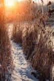 在早晨太阳的温暖的光芒的高沿海草 库存图片