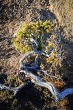 在早晨太阳的苛刻的山岭地区生存植物的特写镜头 免版税库存照片