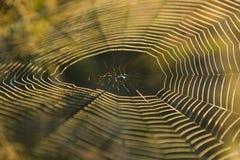 在早晨太阳的蜘蛛网 库存照片