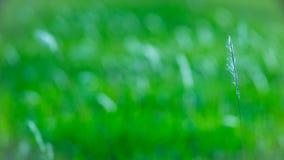 在早晨微风的棉花季节 库存照片