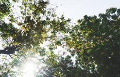 在早晨日出期间的绿色树在公园 免版税库存照片