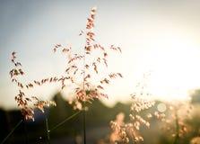在早晨时间的花草 库存图片