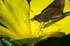 在早晨本质的蓝色蝴蝶飞行 库存照片