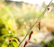 在早晨的干燥叶子 库存照片