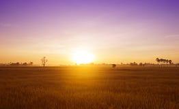 在早晨的领域的日出在夏天 库存图片