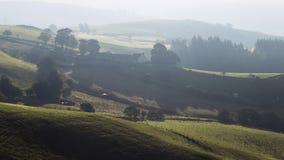 在早晨秋季薄雾的绿色种田的小山 股票视频