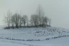 在早晨薄雾的树 库存照片