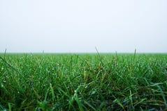 在早晨薄雾的绿草在草的很多露滴 免版税库存图片