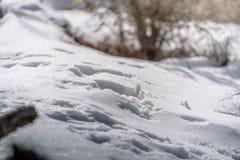 在早晨雪的脚印 库存图片