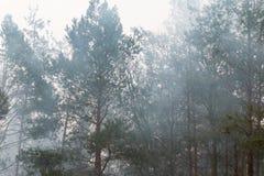 在早晨雾的树 免版税库存照片