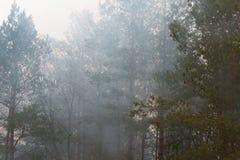 在早晨雾的树 库存图片