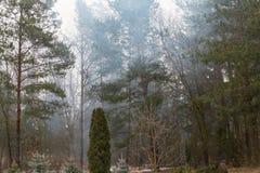 在早晨雾的树 库存照片