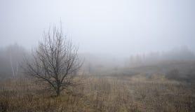 在早晨雾的背景的最基本的树 免版税图库摄影