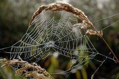 在早晨露水的一个蜘蛛网 免版税库存照片