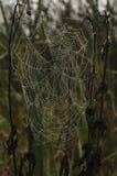 在早晨露水的天体Spiderweb 免版税库存图片