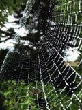 在早晨露水的Spiderweb 库存图片