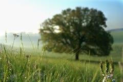 在早晨领域的草露水 免版税图库摄影