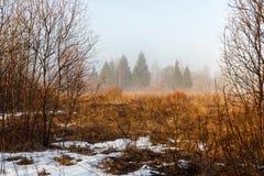 在早期的春天增长与一棵老草在有雾的早晨的领域 免版税库存照片
