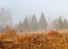 在早期的春天增长与一棵老草在有雾的早晨的领域 免版税库存图片