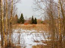 在早期的春天增长与一棵老草在有雾的早晨的领域 库存照片